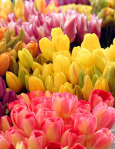 Tulipani colorati - FIORERIA QUADRIFOGLIO VERONA